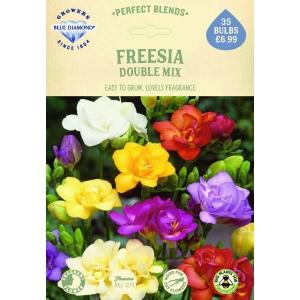 Freesia Double Mix