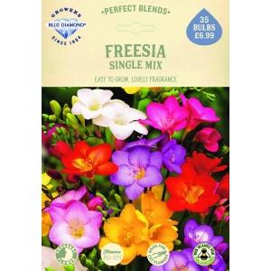 Freesia Single Mix