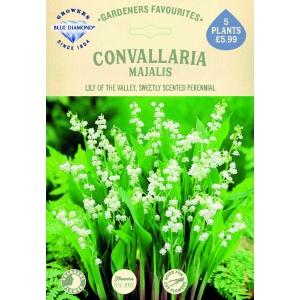 Convallaria Majalis