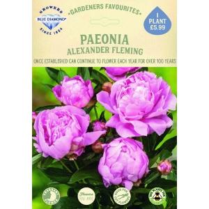 Paeonia Alexander Fleming