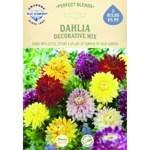 Dahlia Decorative Mix
