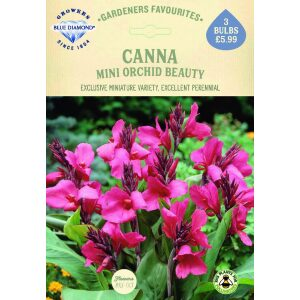 Canna Mini Orchid Beauty