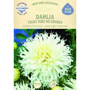 Dahlia Tsuki Yori No Shisha