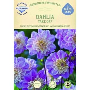 Dahlia Take Off