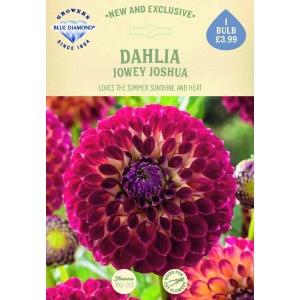Dahlia Jowey Joshua