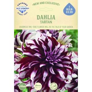 Dahlia Tartan