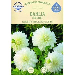 Dahlia Fleurel
