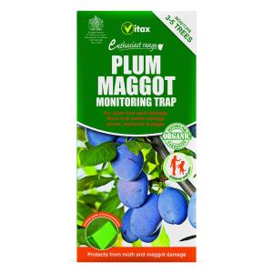 Plum Maggot Trap