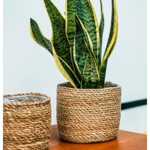 Natural Woven Planter 15cm