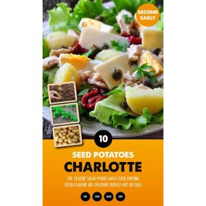 Seed Potatoes – Charlotte