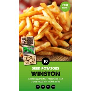 Seed Potatoes – Winston