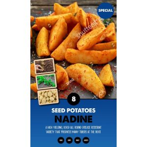 Seed Potatoes – Nadine Special