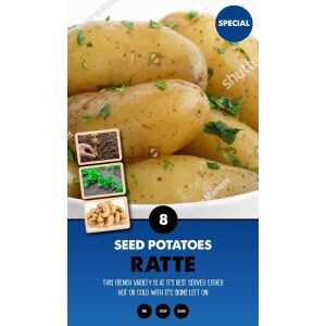 Seed Potatoes – Ratte Special