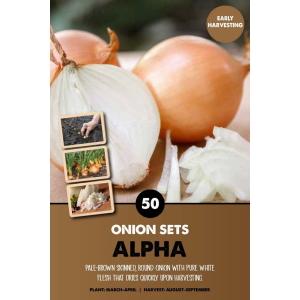 Onion Set – Alpha