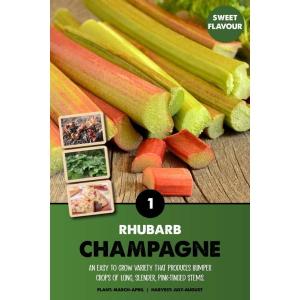Rhubard – Champagne