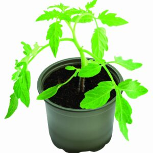 Growing Pots Bio Pk5