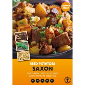 Seed Potatoes – Saxon