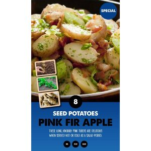 Seed Potatoes – Pink Fir Apple Special