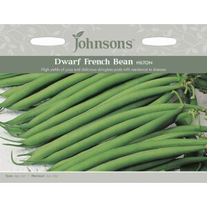 Dwarf French Bean Hilton JAZ