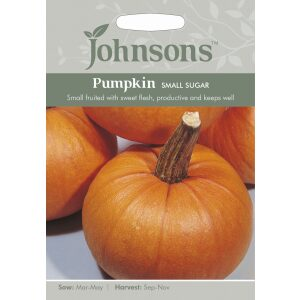 Pumpkin Small Sugar JAZ