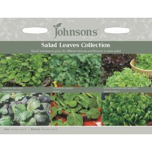 Salad Leaves Collection JAZ