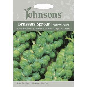Brussels Sprout Evesham Special JAZ