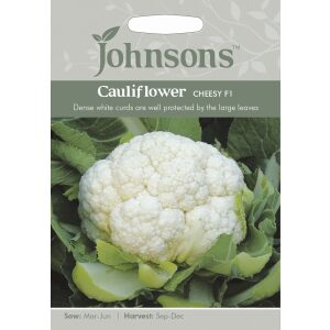 Cauliflower Cheesy F1 JAZ