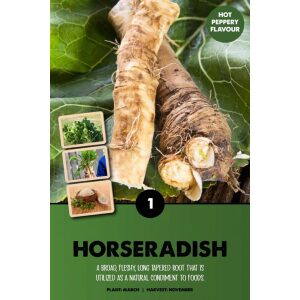 Horseradish – Armoricia Rusticana