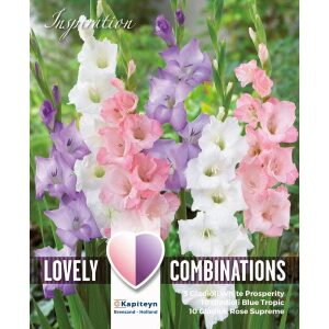 Combi Gladioli White, Blue And Pink