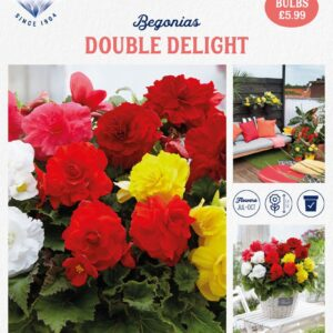 Begonia Double Delight