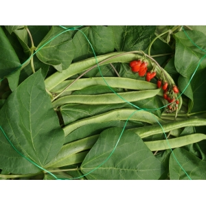 Smart Garden Pea & Bean Netting, 150mm, 2x5m, Green