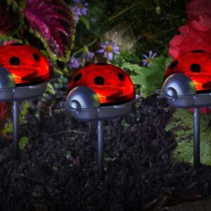 Ladybird Stake Triple Pack