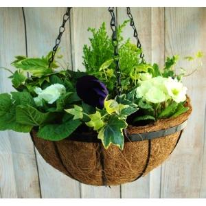Georgian Hanging Basket 12″