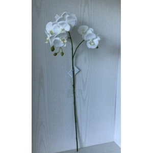 large orchid stem