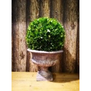 19cm buxus ball in urn