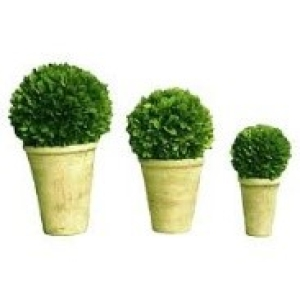 20cm buxus ball in pot ( small )