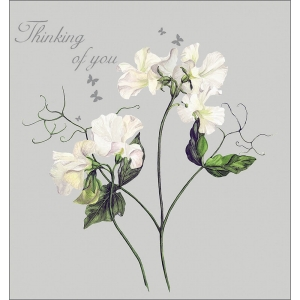Red Lotus 16 cm x 16 cm Thinking of you card White Sweet Pea