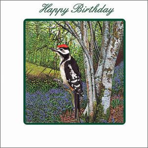Green Square 14.5 cm x 14.5 cm Birthday Card Woodpecker
