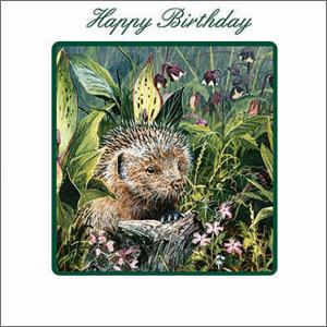 Green Square 14.5 cm x 14.5 cm Birthday Card Hedgehog