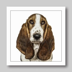 Brown And White Dog Basset Hound