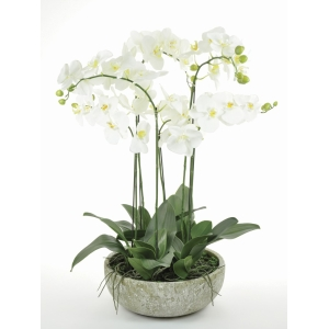 Exquisite Potted Orchid