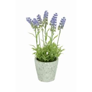 Hybrid Lavender Stone Pot