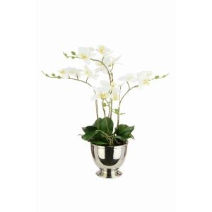 Phalaenopsis Silver Pot White