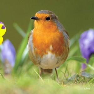 Noise Card Robin