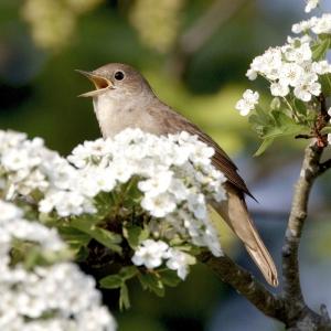Noise Card Nightingale