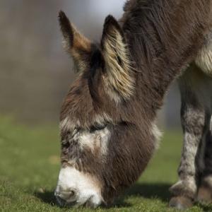 Noise Card Donkey