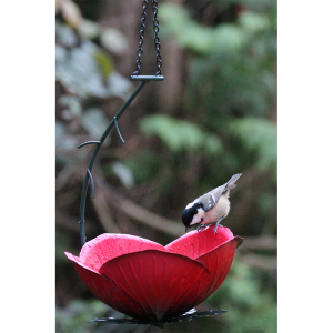 Rose Hanging Feeder with Free Superior Seed 2kg