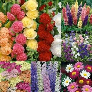 Cottage Garden Perennials 3L