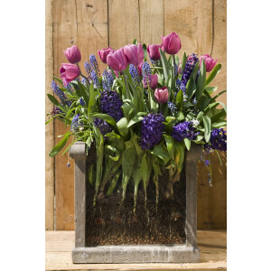 Layered Planting Bulbs Pink & Blue Collection