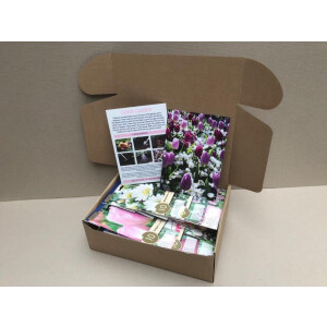 Flower Bulb Collection – Blueberry Ripple